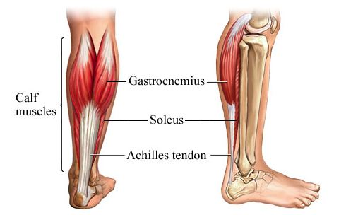 how to stretch the elusive soleus calf muscle, Muscles